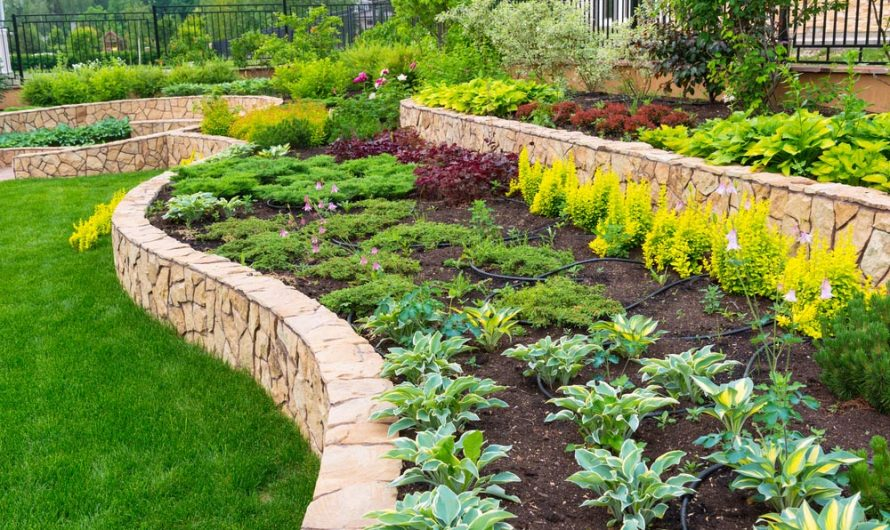 Backyard Garden Part 1