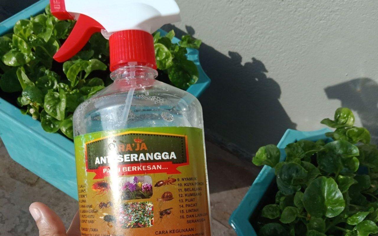 Cara Mudah Cegah Serangga Perosak Tanaman Tanpa Guna Racun
